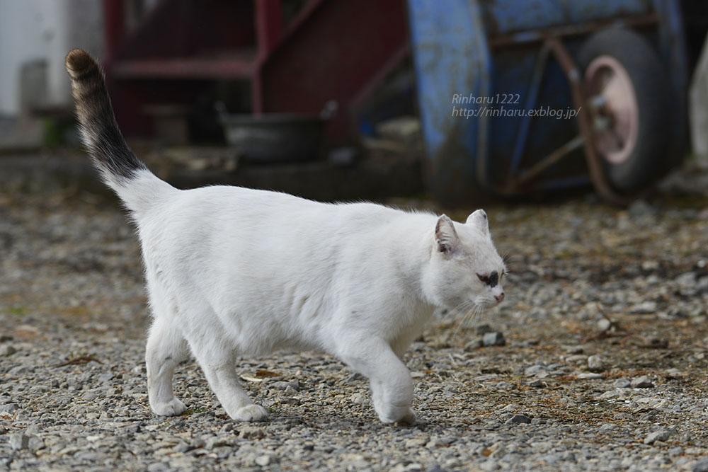 2020.1.3 我が家の猫たち(とらたろう、まお、ましゅう、くぅ) 【Cats】_f0250322_195556.jpg