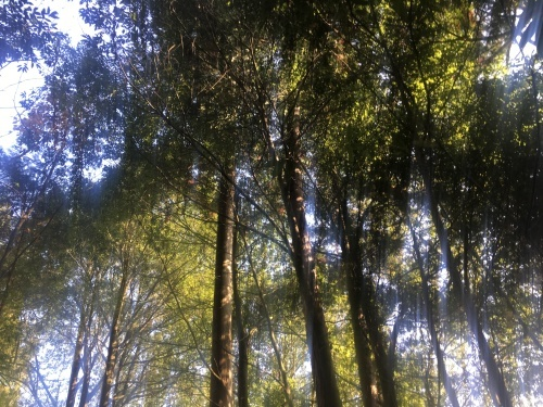 精霊の森_e0295926_16290651.jpg