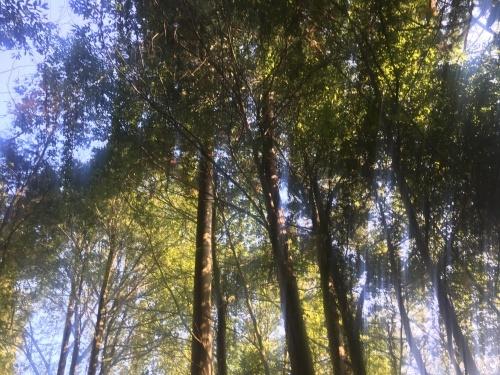 精霊の森_e0295926_16292180.jpg