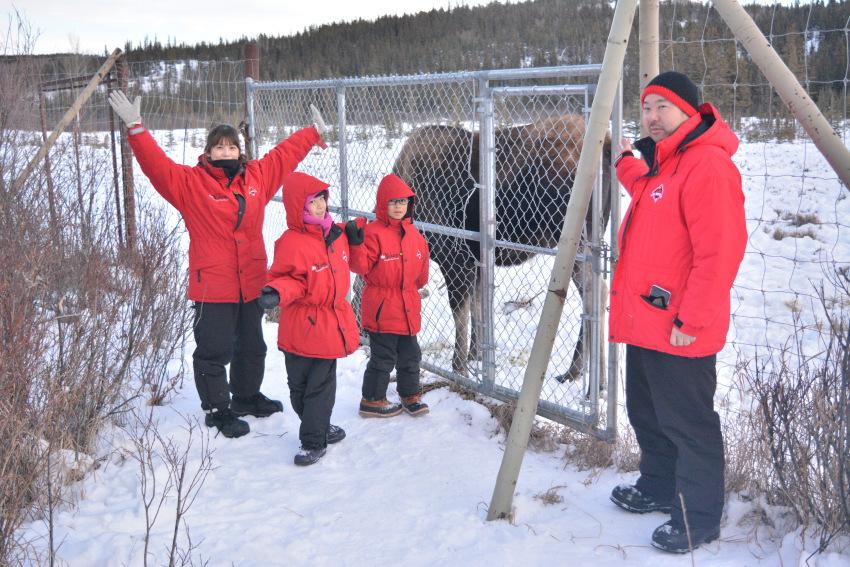 極北の住む動物を観察 ミート・ザ・ワイルド_d0112928_04595480.jpg