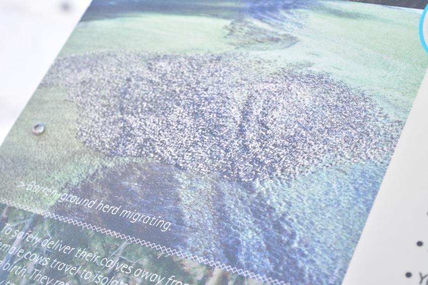 極北の住む動物を観察 ミート・ザ・ワイルド_d0112928_05143735.jpg