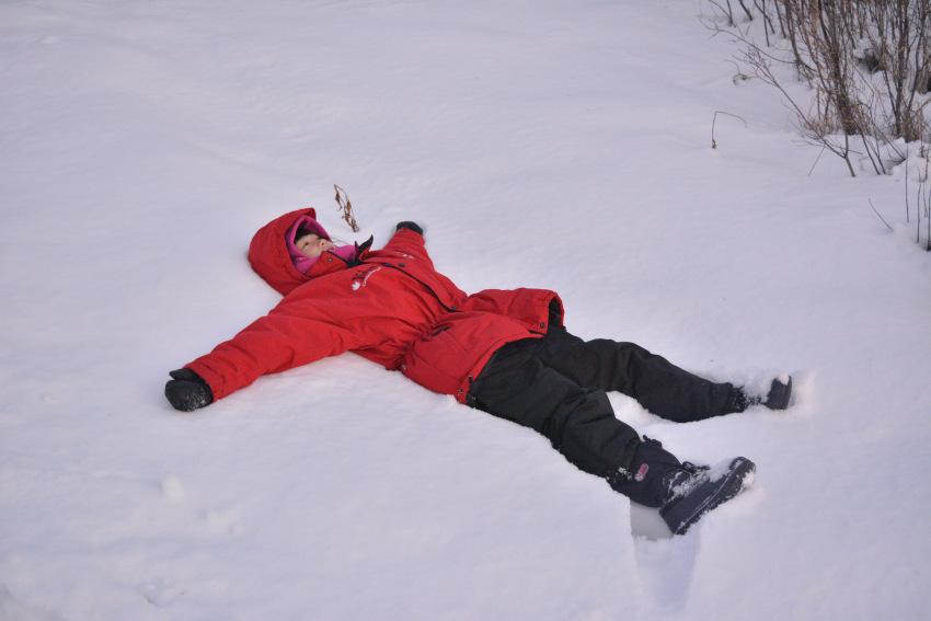 極北の住む動物を観察 ミート・ザ・ワイルド_d0112928_05221944.jpg