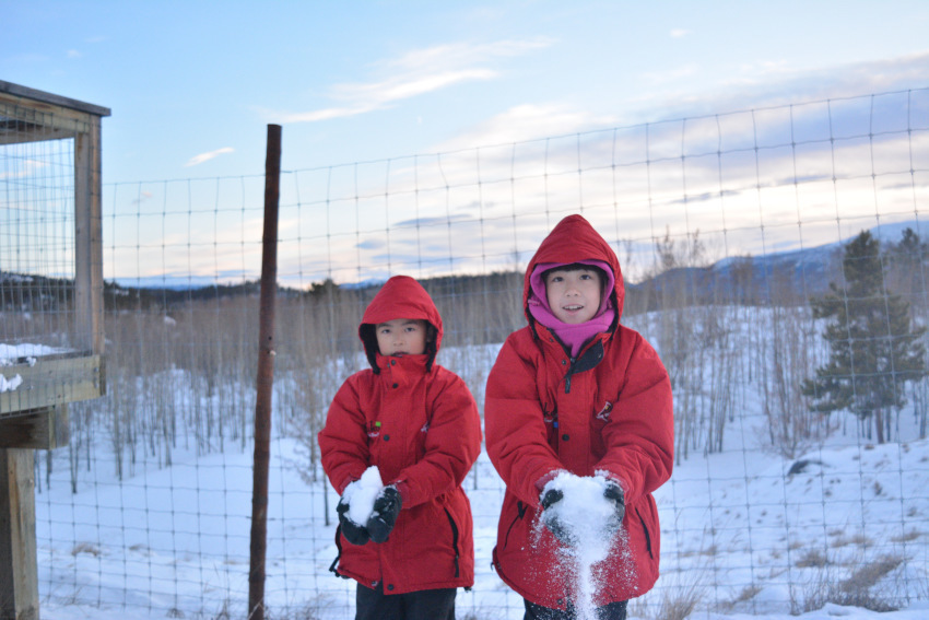 極北の住む動物を観察 ミート・ザ・ワイルド_d0112928_05230252.jpg