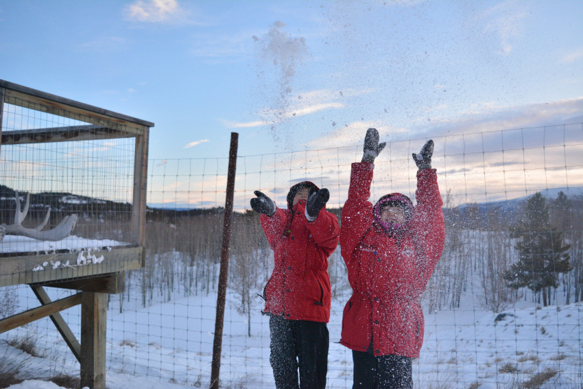 極北の住む動物を観察 ミート・ザ・ワイルド_d0112928_05253432.jpg