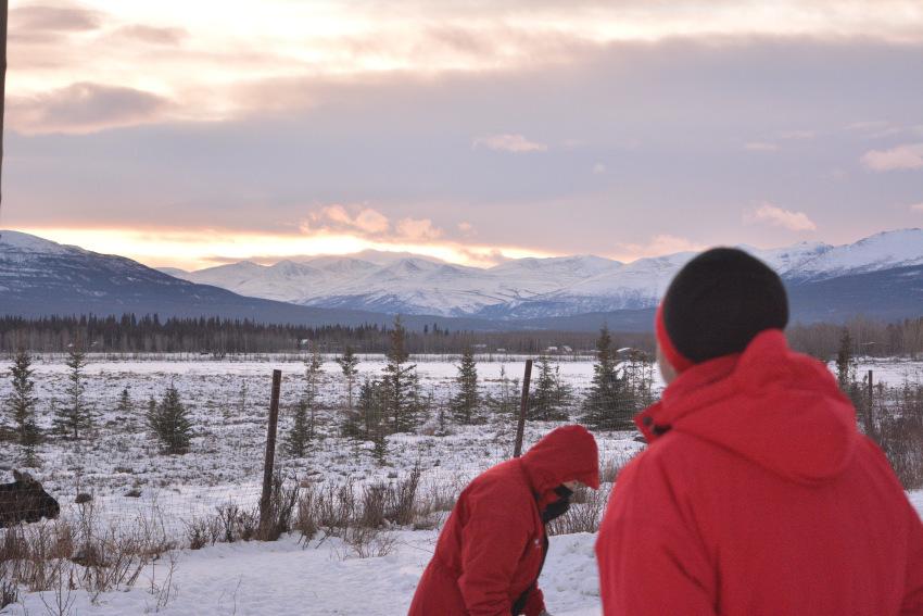 極北の住む動物を観察 ミート・ザ・ワイルド_d0112928_05301374.jpg