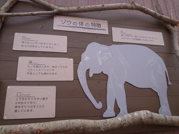 ゾウの森の住み心地はいかがですか_b0024758_13024003.jpg