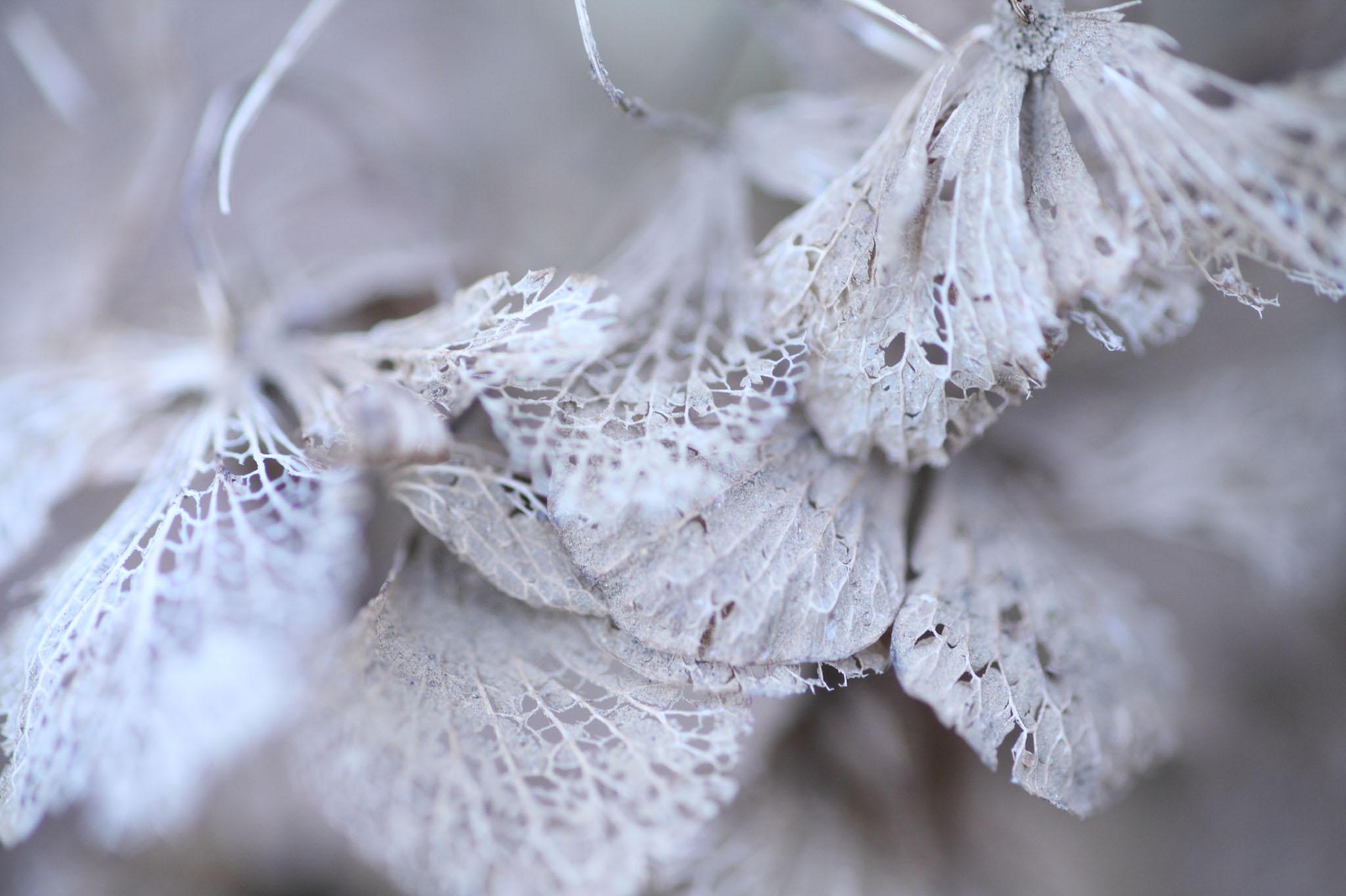 過ぎ行く季節を感じる_c0299360_21391380.jpg