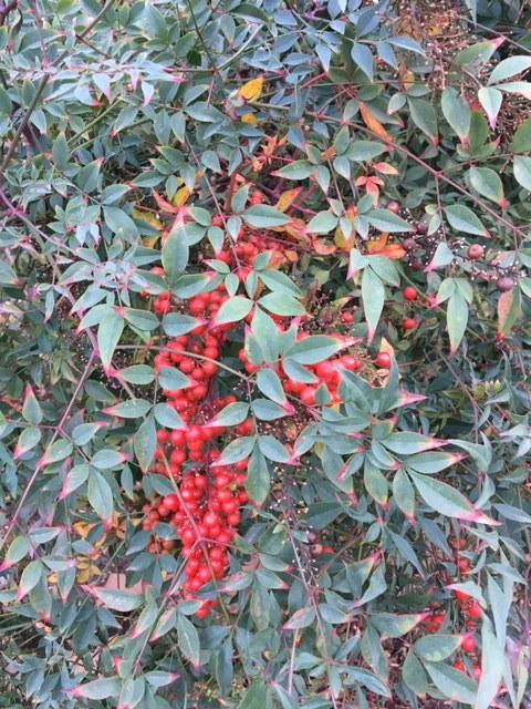12月から1月の冬の庭_e0350971_03265566.jpg