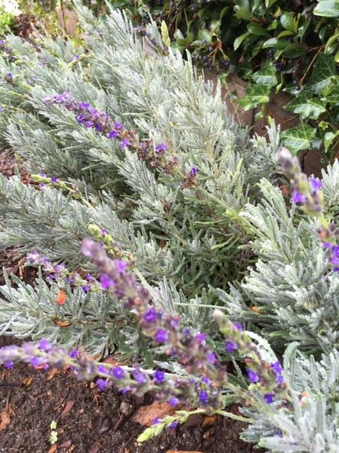 12月から1月の冬の庭_e0350971_03395851.jpg