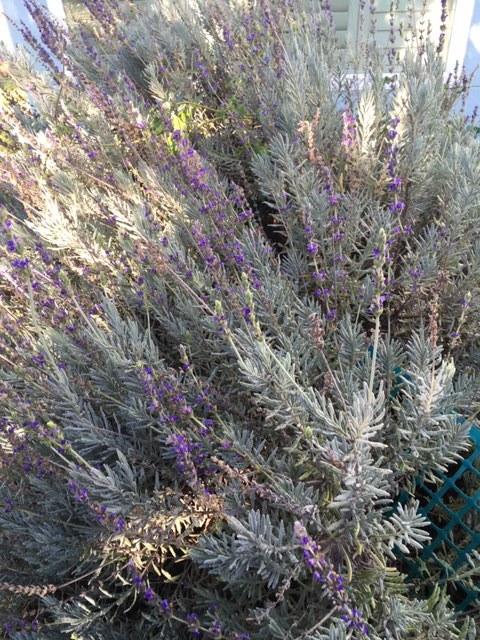 12月から1月の冬の庭_e0350971_03403040.jpg