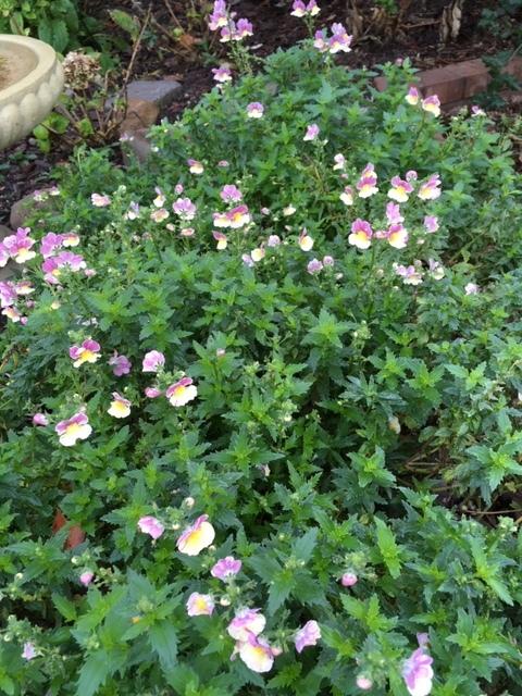 12月から1月の冬の庭_e0350971_03421925.jpg