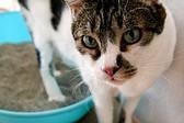 猫ちゃんの飲水を増やしましょう_e0367571_19355627.jpg