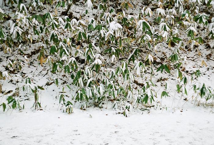 大谷地神社のハートご神木と恒例親族新年会_c0182775_1713919.jpg