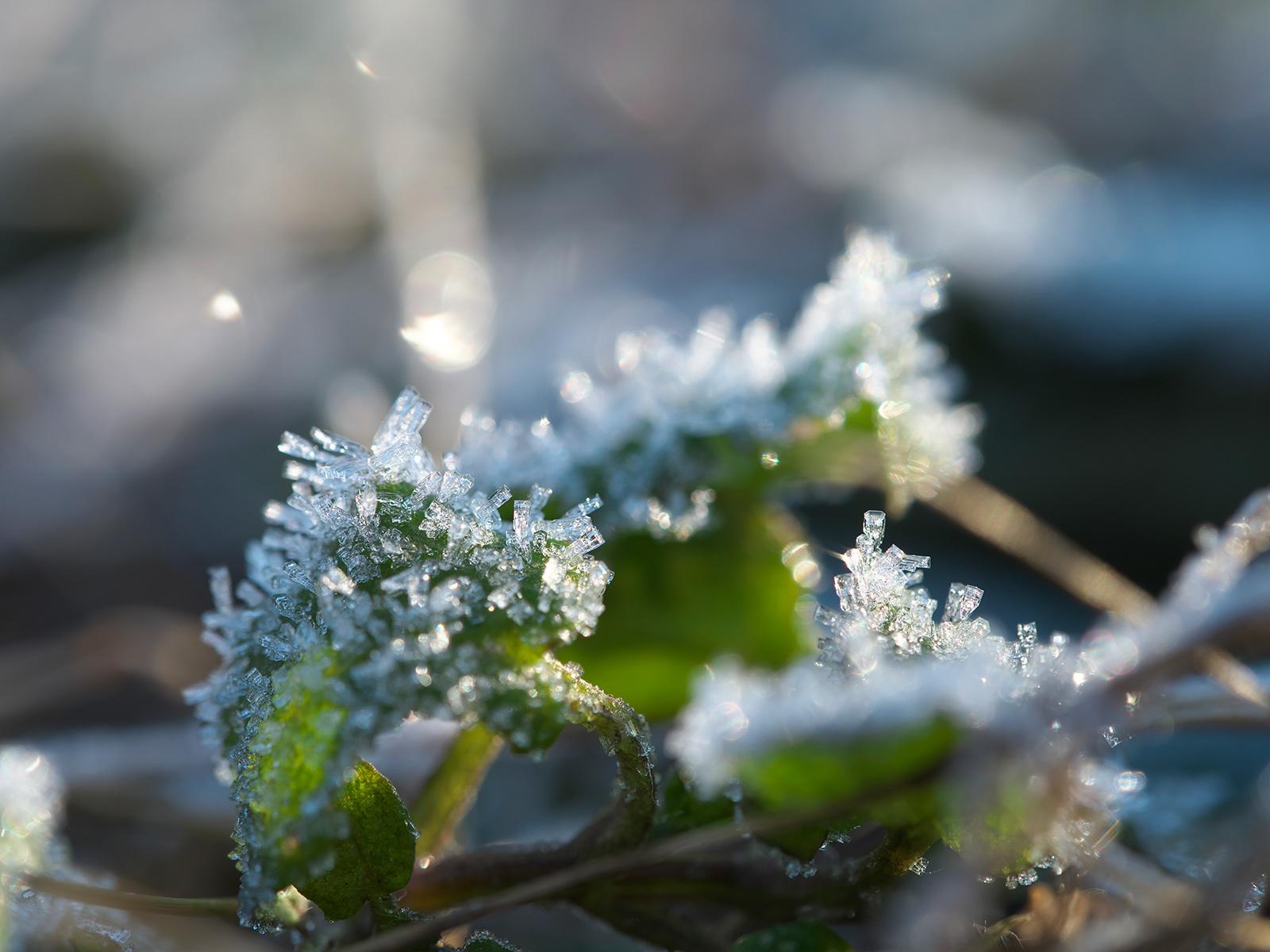 凍てつく日_f0121181_04470332.jpg