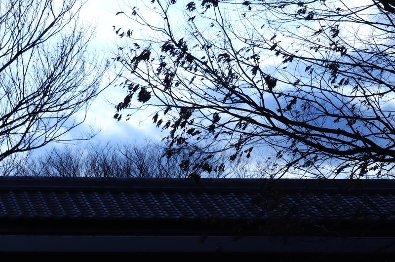 「まだまだ」、春は遠いのです?_a0214329_17502777.jpg