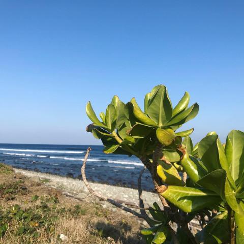 久しぶりのお友達とビーチお散歩_b0181141_18271882.jpg
