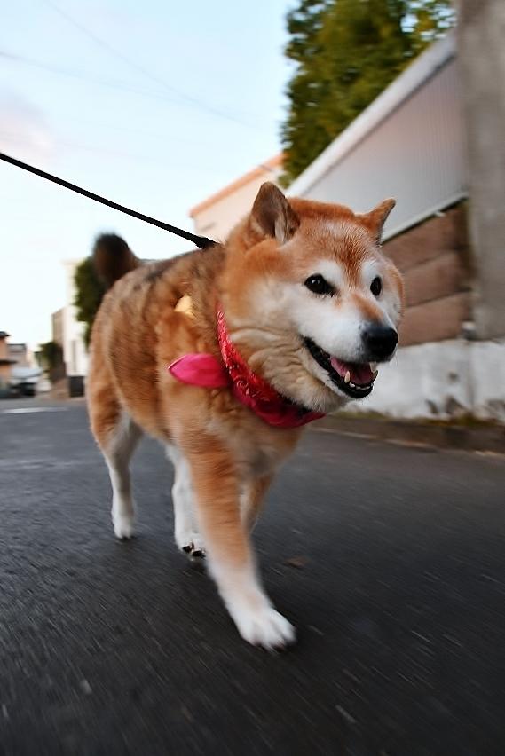 飛躍の犬生は・・・_b0314043_08124497.jpg