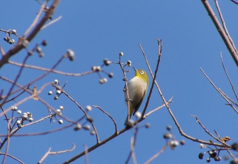 鳥ぢゃ_c0065260_18390189.jpg