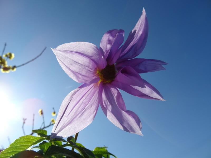 我が家の花壇作業初め_c0108460_16375858.jpg