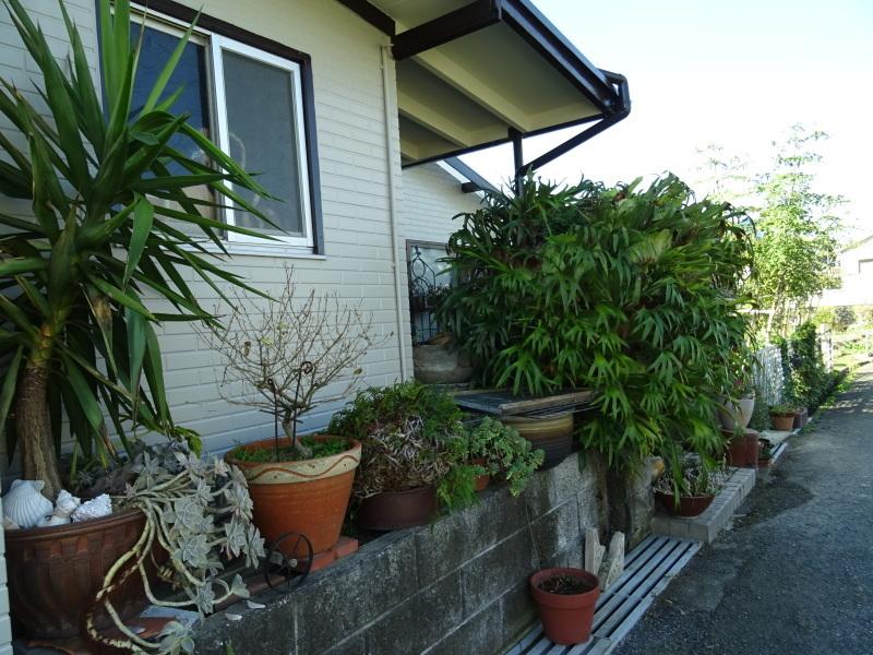 我が家の花壇作業初め_c0108460_16392535.jpg