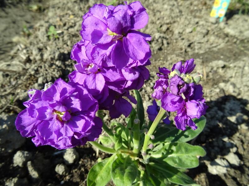 我が家の花壇作業初め_c0108460_16421335.jpg