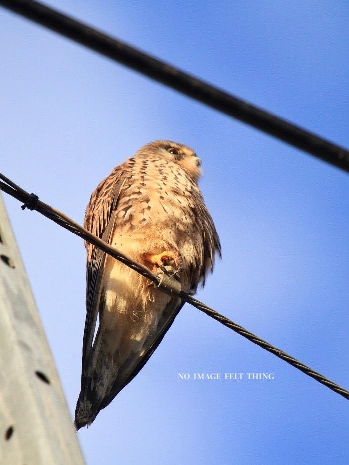 2020年初鳥撮り♪_d0367763_22275732.jpg