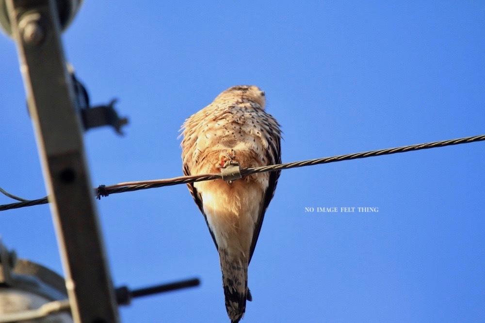 2020年初鳥撮り♪_d0367763_22275746.jpg