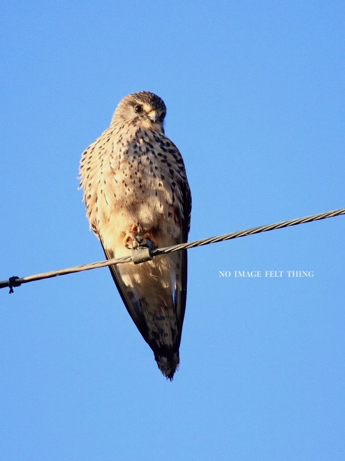 2020年初鳥撮り♪_d0367763_22275784.jpg
