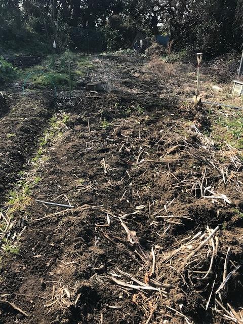 今年も寒起こしで六国見山の畑の仕事始め1・4_c0014967_21022001.jpg