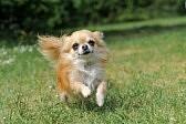NHKの「子犬がうちにやってきた!」をみました_e0367571_16544131.jpg