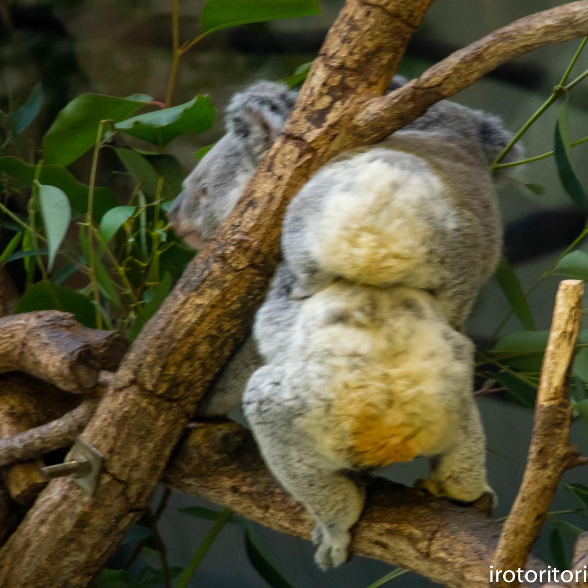 多摩動物園  (アオサギ)  2020/01/02_d0146592_00270294.jpg