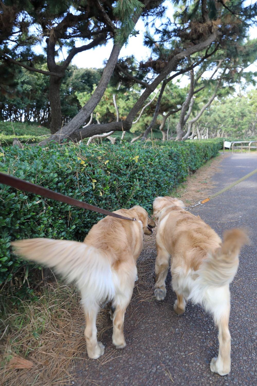 同胎犬のアンちゃん♪_b0275998_20242336.jpg