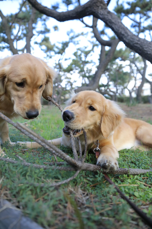同胎犬のアンちゃん♪_b0275998_20285413.jpg