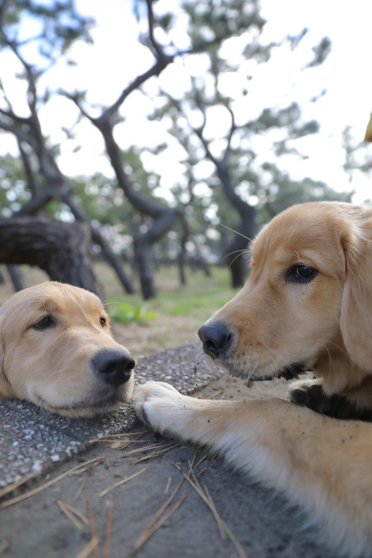 同胎犬のアンちゃん♪_b0275998_20285670.jpg