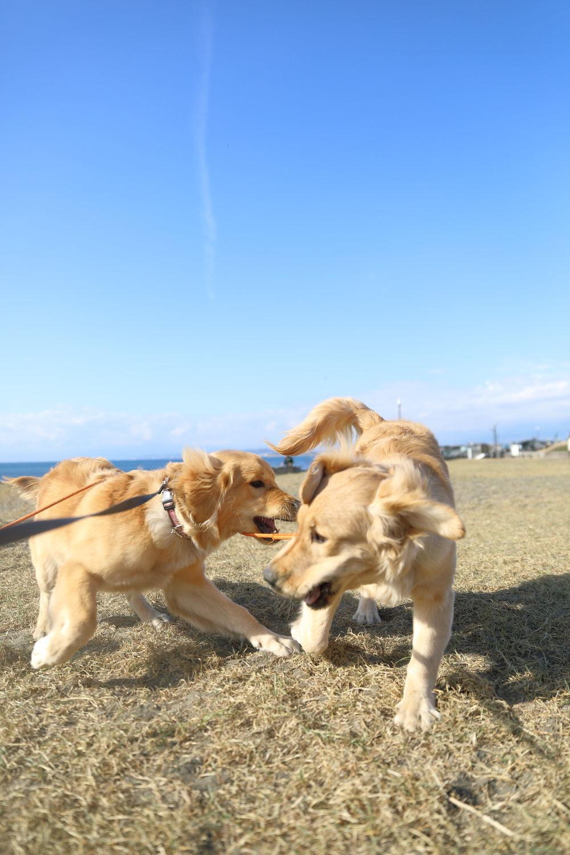 同胎犬のアンちゃん♪_b0275998_20402584.jpg