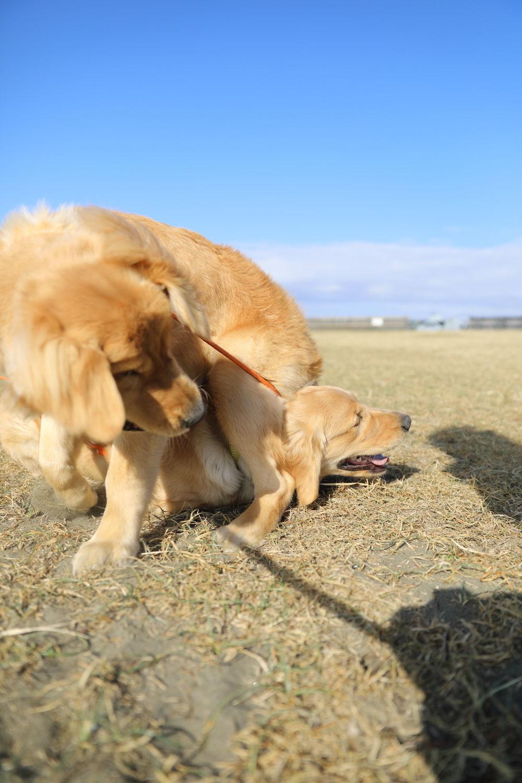 同胎犬のアンちゃん♪_b0275998_20421033.jpg