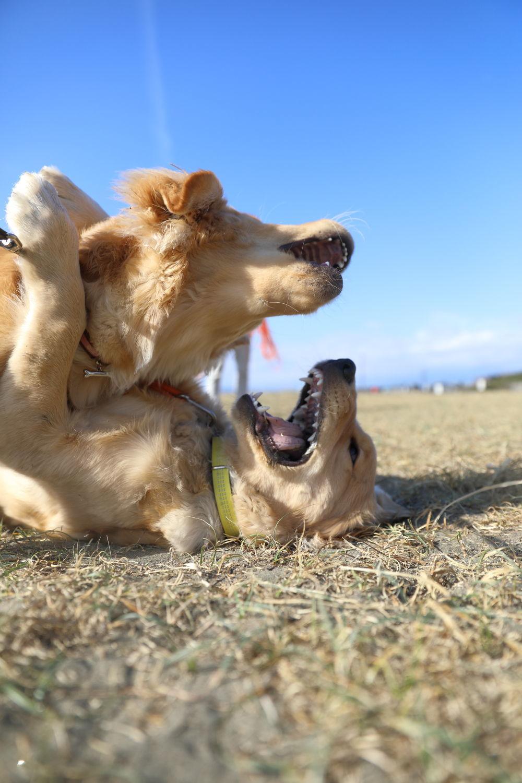 同胎犬のアンちゃん♪_b0275998_20470456.jpg
