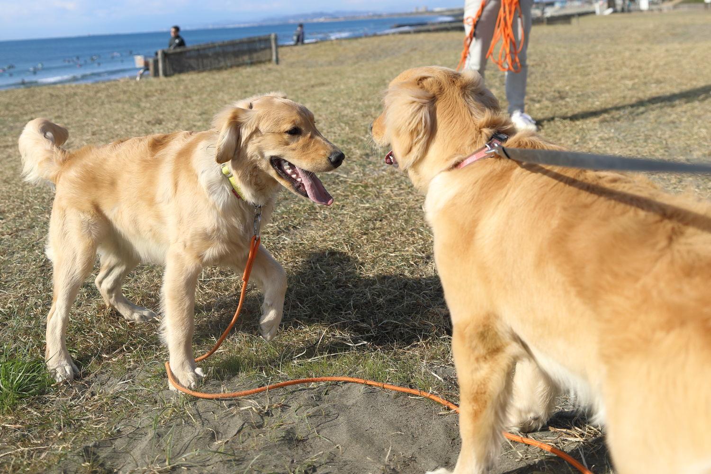 同胎犬のアンちゃん♪_b0275998_20515818.jpg