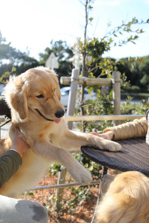 同胎犬のアンちゃん♪_b0275998_21014981.jpg