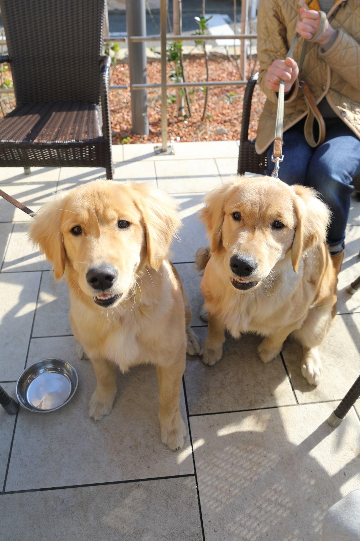 同胎犬のアンちゃん♪_b0275998_21040691.jpg
