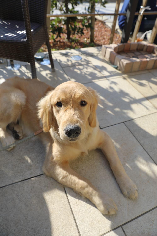 同胎犬のアンちゃん♪_b0275998_21091510.jpg