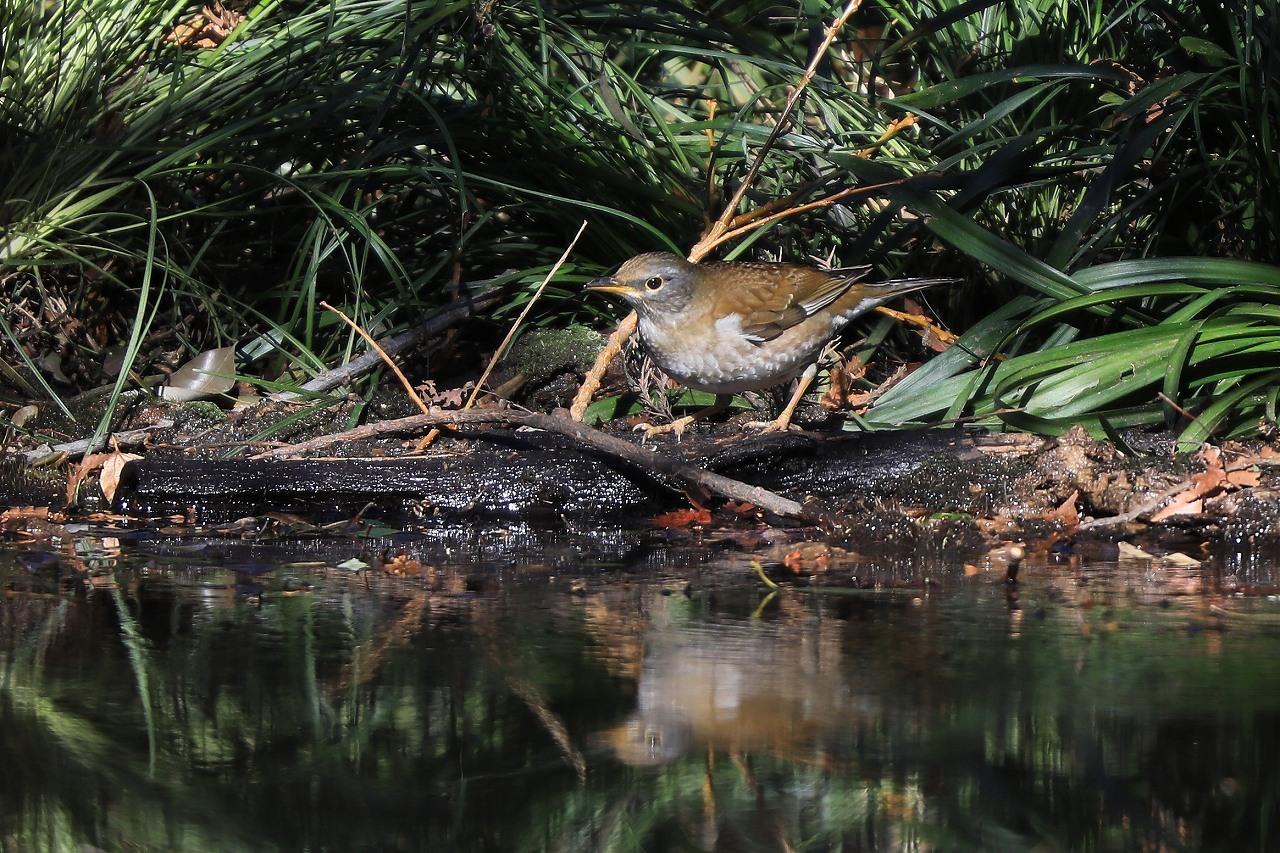 H野鳥の森にて_f0296999_15011867.jpg