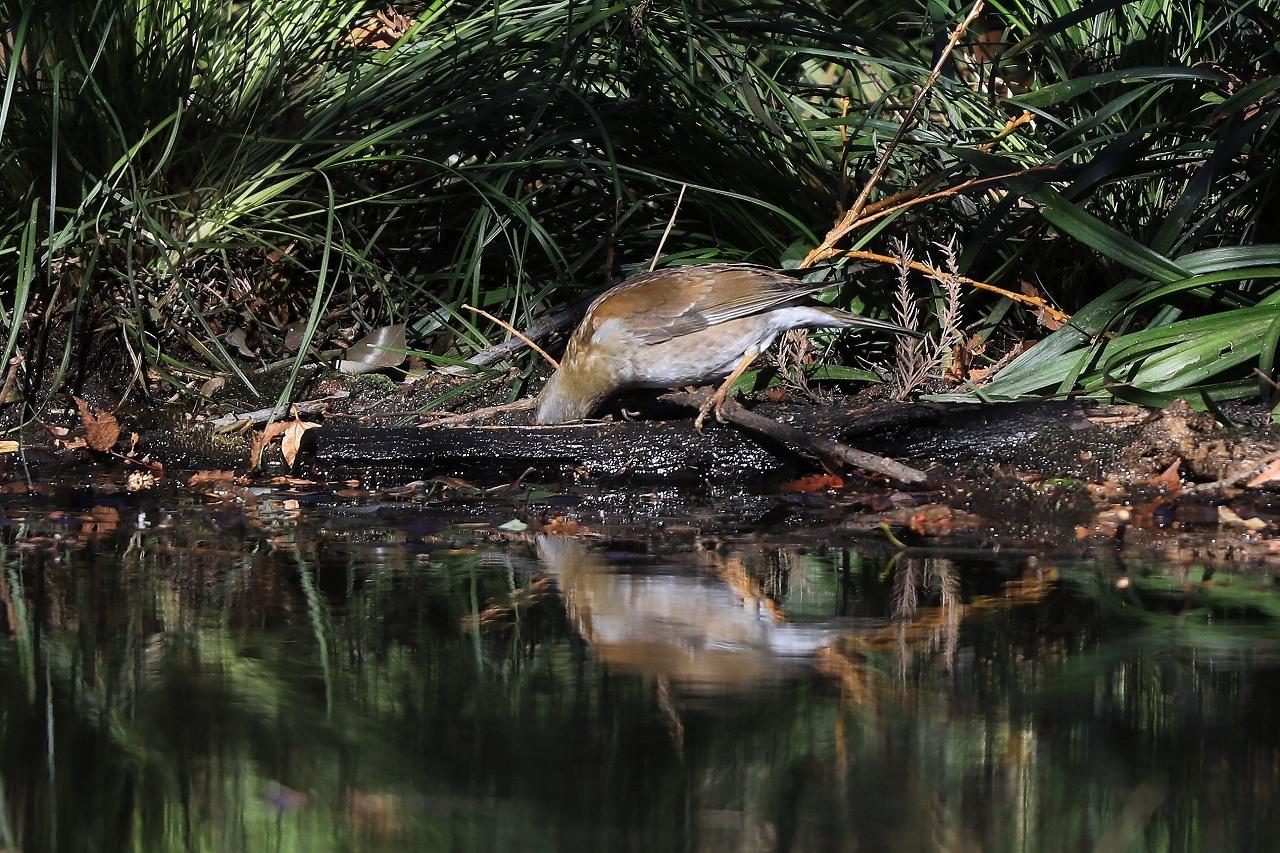 H野鳥の森にて_f0296999_15013752.jpg