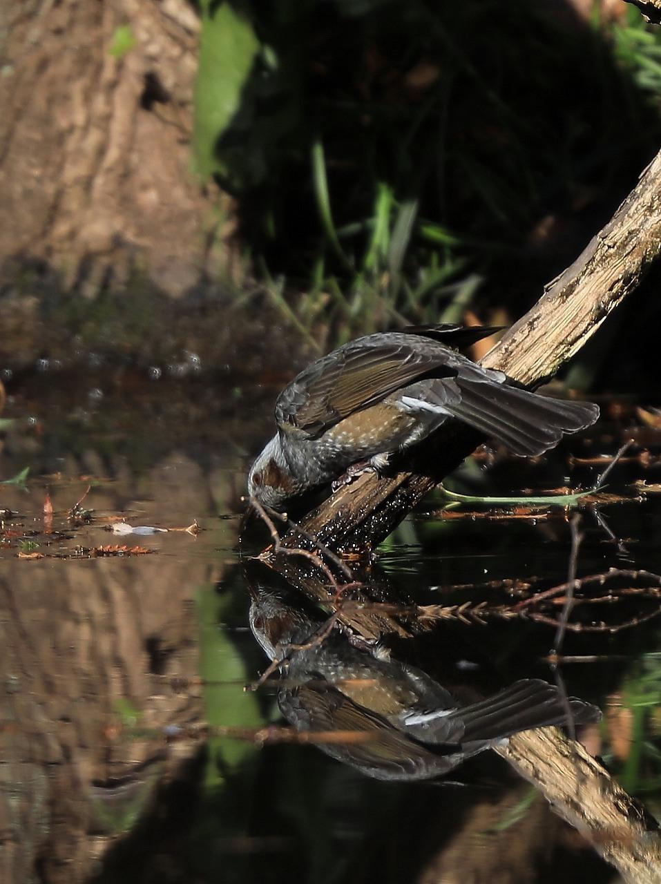 H野鳥の森にて_f0296999_15030957.jpg