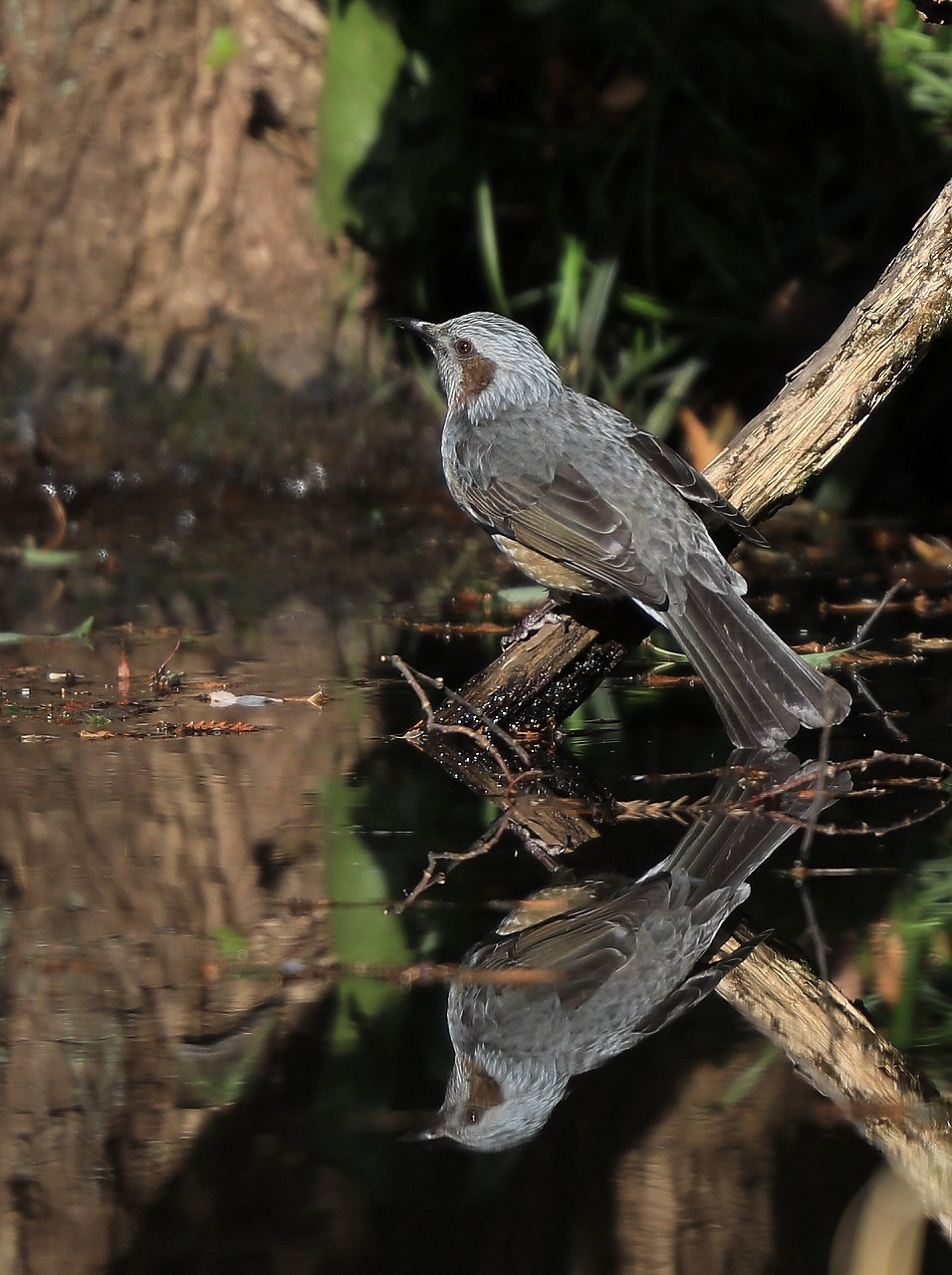 H野鳥の森にて_f0296999_15031839.jpg