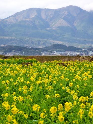 滋賀 第一なぎさ公園 2020_c0043403_13145582.jpg