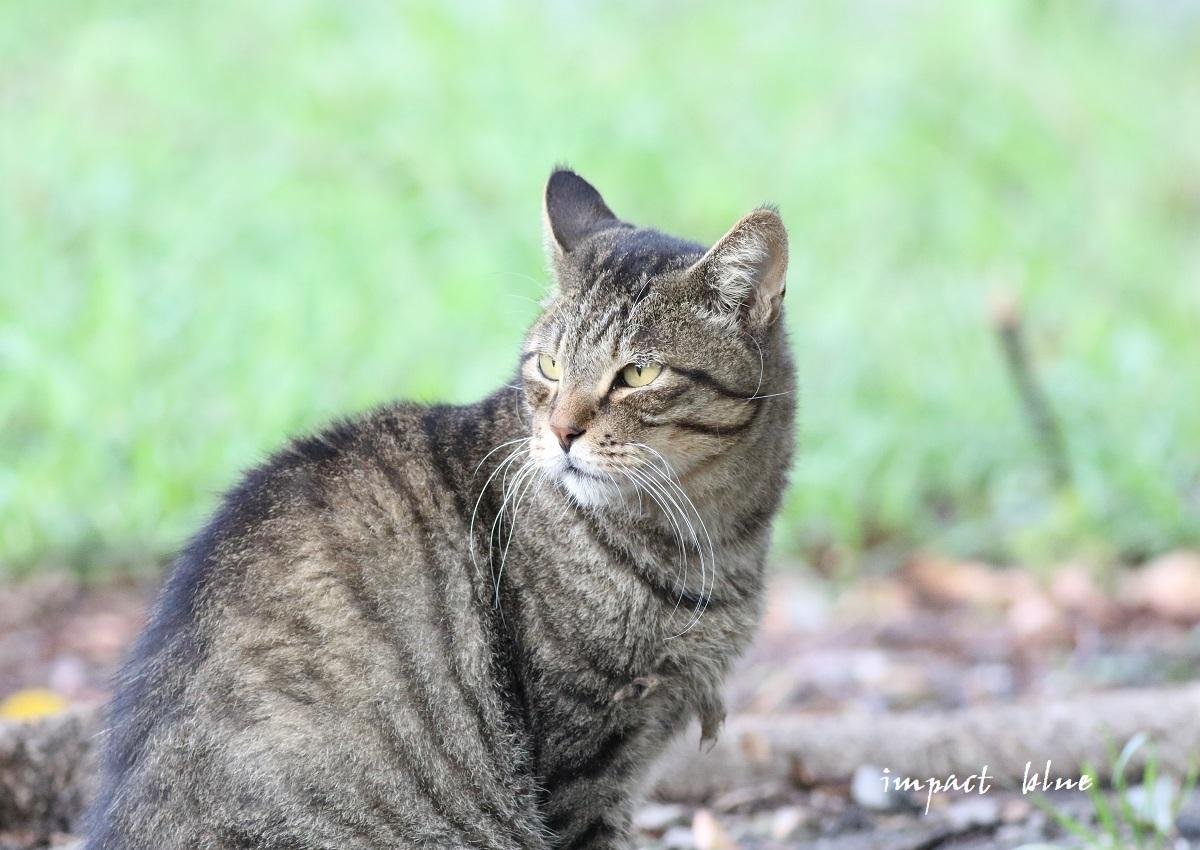 河川敷公園の猫ちゃん(^^)/_a0355908_11314146.jpg