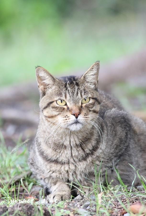 河川敷公園の猫ちゃん(^^)/_a0355908_11314613.jpg