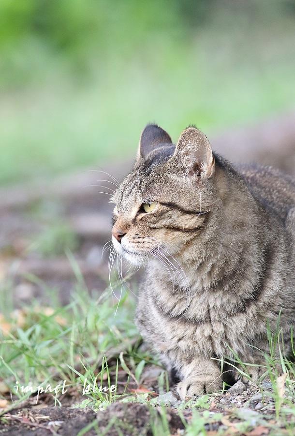 河川敷公園の猫ちゃん(^^)/_a0355908_11315068.jpg