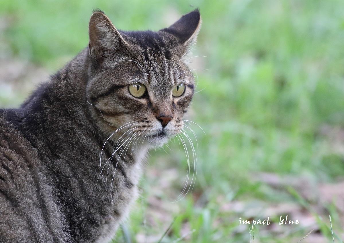 河川敷公園の猫ちゃん(^^)/_a0355908_11315639.jpg